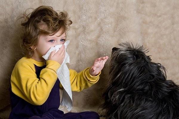 Nên cân nhắc vấn đề nuôi thú cưng nếu bé bị dị ứng
