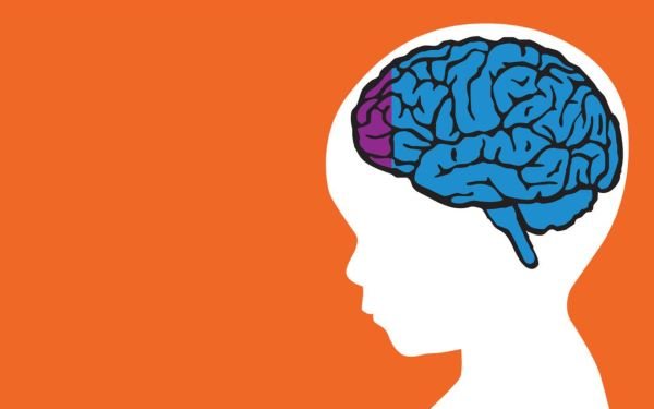 cấu trúc não bộ