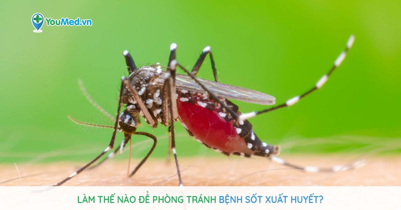 Làm thế nào để phòng tránh bệnh sốt xuất huyết