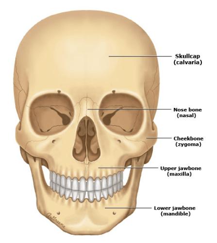 chấn thương đầu 1