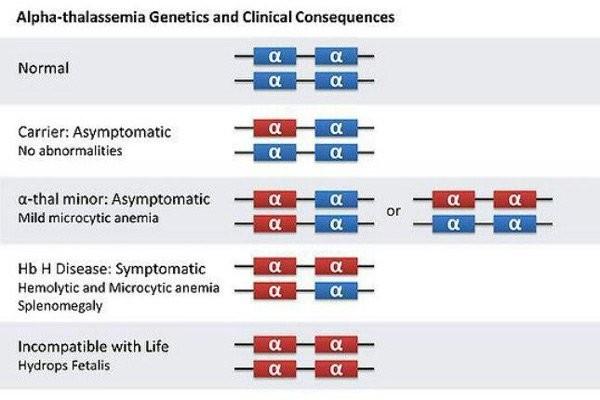 Minh hoạ các kiểu hình gen của α - thalassemia
