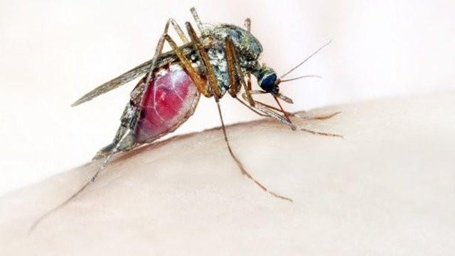 Bệnh sốt rét có thể phòng ngừa được không?