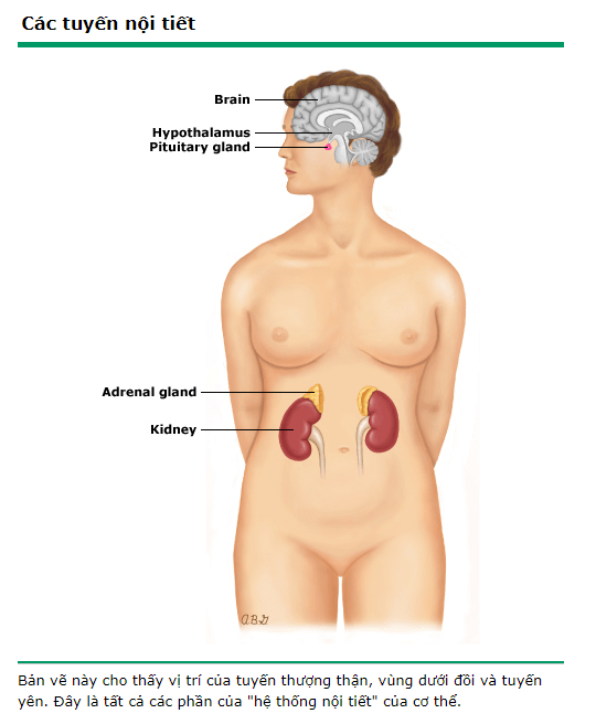 Androgen 1