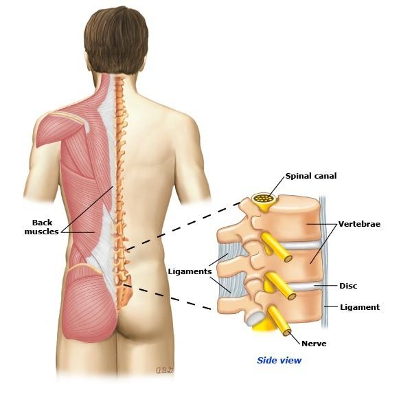 Chấn thương cột sống là gì ?
