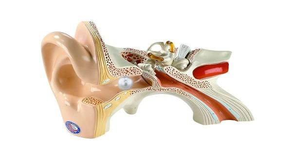 Tổng quan về dị vật tai