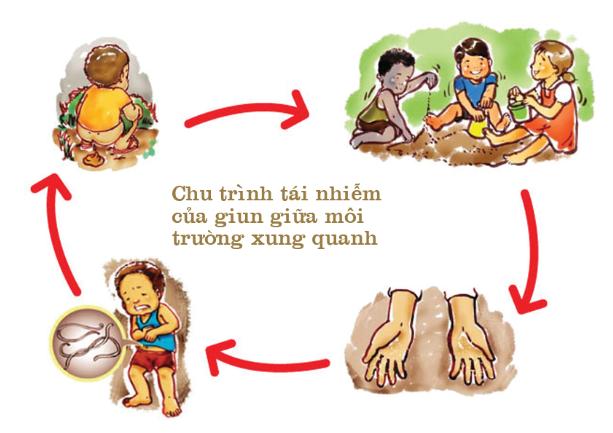 Chu trình tái nhiễm của Giun tóc giữa môi trường xung quanh