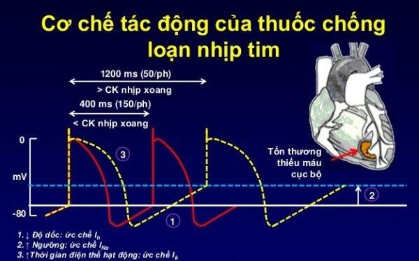 cơ chế hoạt động của thuốc chống loạn nhịp tim