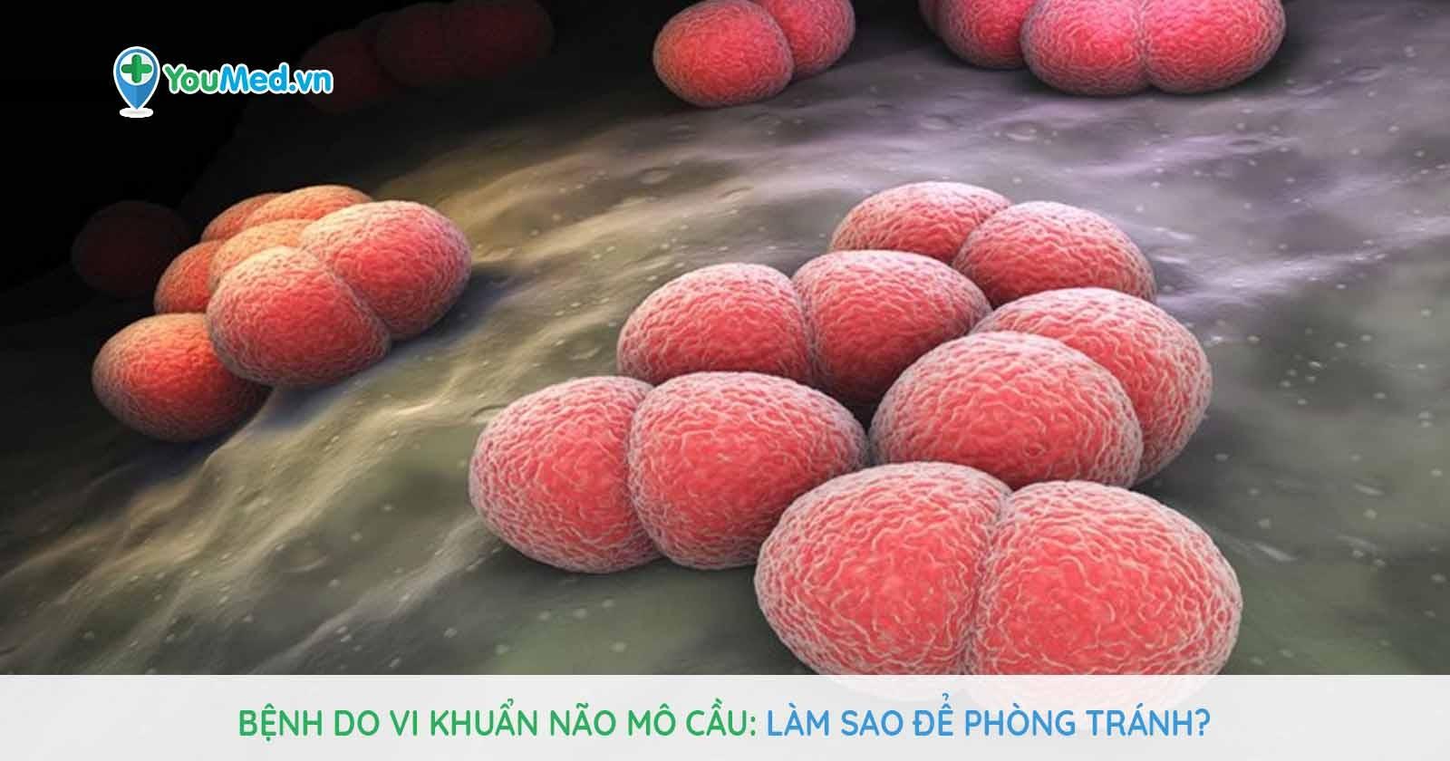 Bệnh do vi khuẩn não mô cầu: Làm sao để phòng tránh?