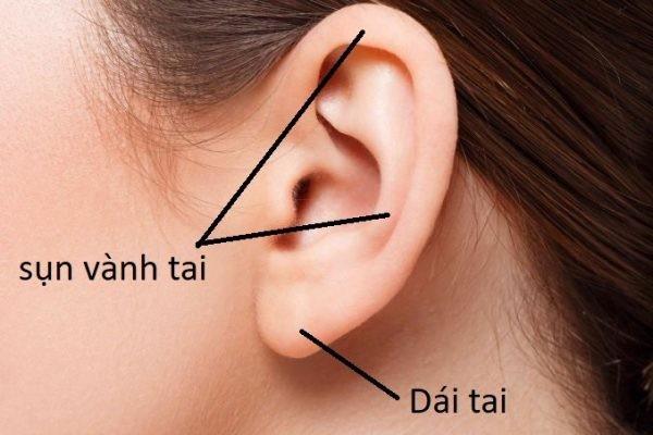 Cấu tạo của Sụn vành tai