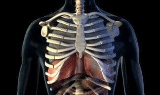 Một hơi thở được hình thành nhờ những cấu trúc nào?