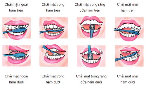 chải răng đúng cách trình tự chải