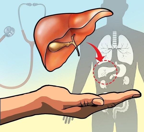 transplant liver
