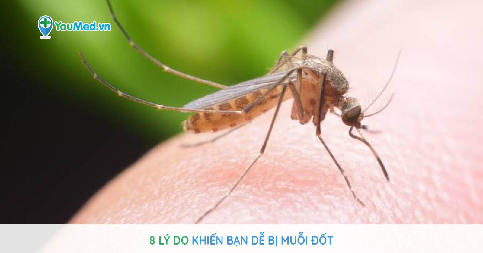 8 lý do khiến bạn dễ bị muỗi đốt
