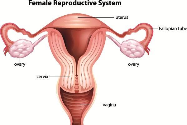 Sự thay đổi của cổ tử cung khi mang thai