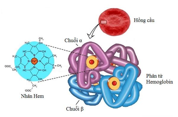 Rối loạn chuyển hóa Porphyrin