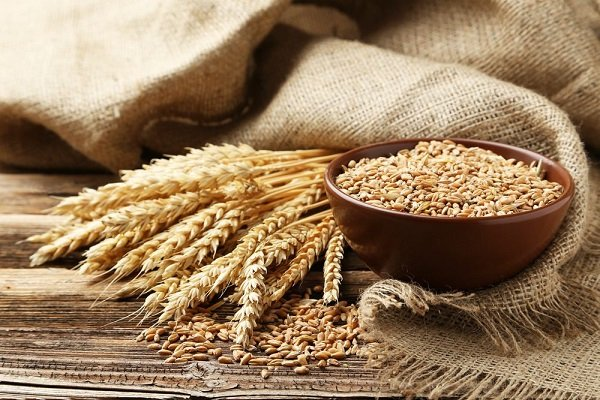 Lúa mì và protein lúa mì