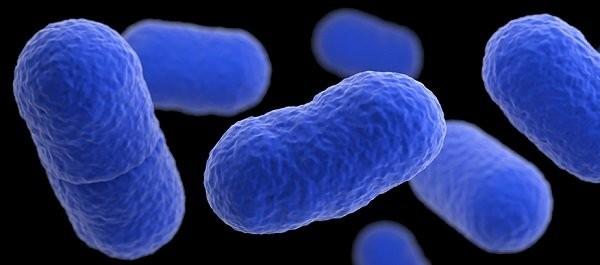 Nhiễm listeria gây tiêu chảy