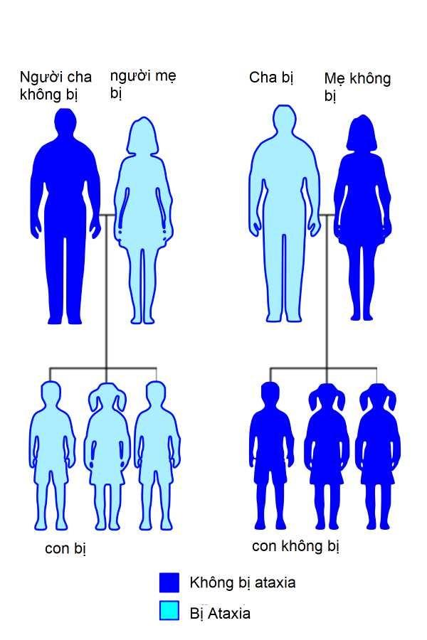 Mất điều hòa vận động (Ataxia) di truyền