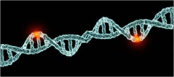 nguyên nhân ung thư là do đột biến gen