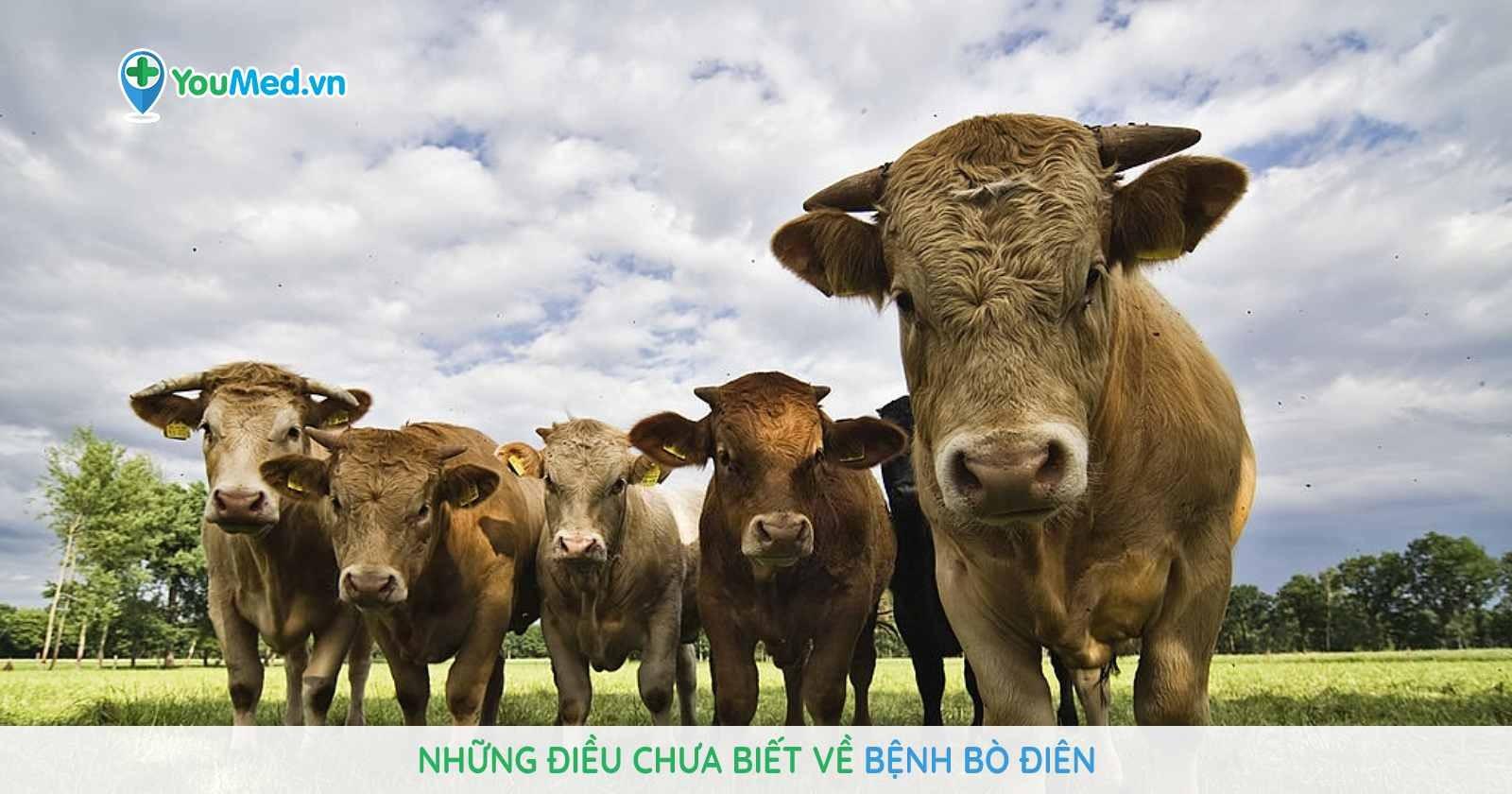 nhung-dieu-chua-biet-ve-benh-bo-dien