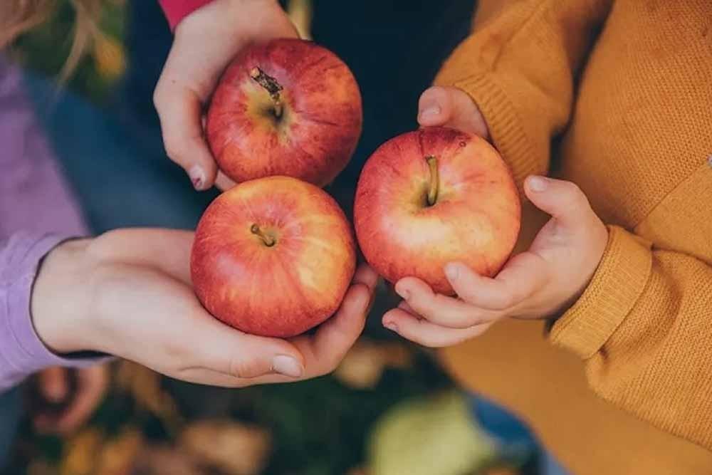 Bên cạnh tốt cho não bộ, quả táo còn ngăn ngừa các bệnh liên quan đến sa sút trí tuệ