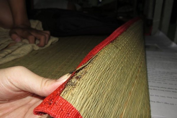 Tuy không nguy hiểm nhưng rệp giường mang lại khá nhiều phiền toái