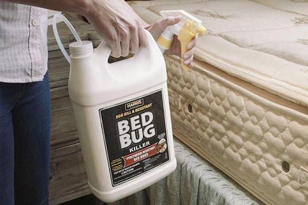 Dùng thuốc diệt rệp để mang lại hiệu quả cao hơn