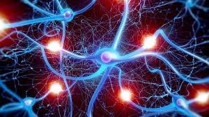 Sự dẫn truyền tín hiệu của các tế bào thần kinh