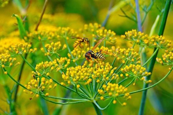 Hoa có màu vàng rực rỡ