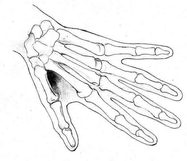 giải phẫu bàn tay