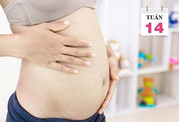 mang thai tuần 14