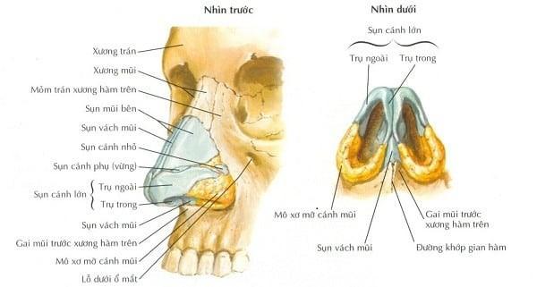 Xương mũi là 2 xương nhỏ nằm ở vị trí 1/3 trên của mũi