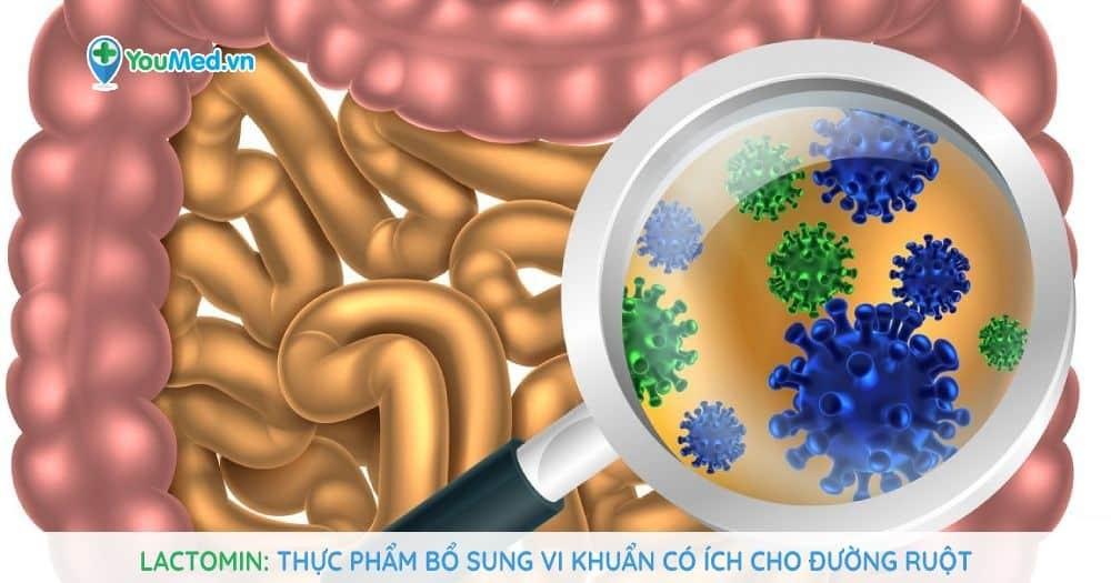 Lactomin: Thực phẩm bổ sung vi khuẩn có ích cho đường ruột