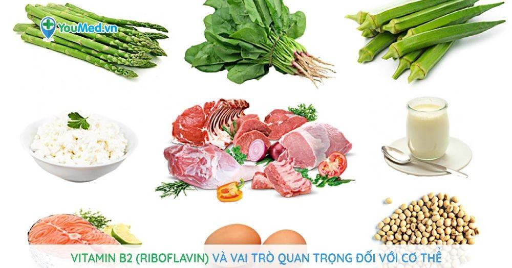 Vitamin B2 (riboflavin) và vai trò quan trọng đối với cơ thể