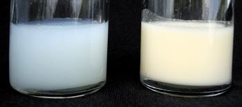 Sữa đầu nhiều nước và chất dinh dưỡng sữa cuối nhiều chất béo
