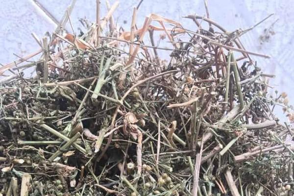 Theo Đông y, dược liệu có vị đắng nhẹ, hậu ngọt, mùi thơm đặc trưng