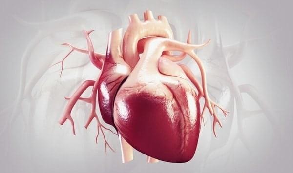 Digoxin dùng cho người bệnh suy tim
