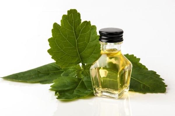 Tinh dầu Hoắc hương hỗ trợ tốt cho tinh thần, hô hấp và tiêu hóa