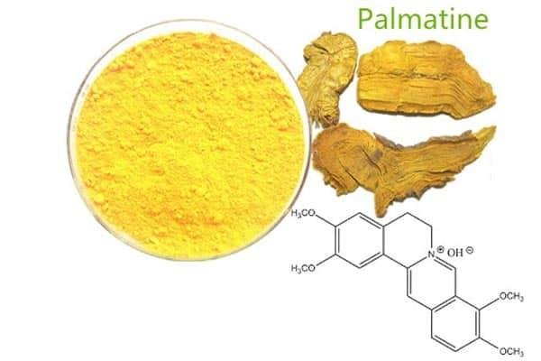 Thành phần palmatin có trong Hoàng đằng mang lại nhiều tác dụng