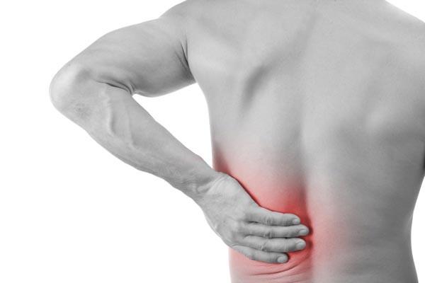 Vị thuốc hỗ trợ trong điều trị đau lưng, bổ can thận