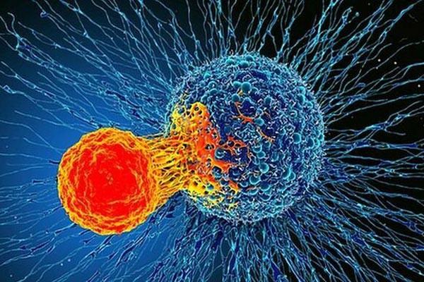 Nhờ liệu pháp miễn dịch, hệ miễn dịch có thể chống lại ung thư