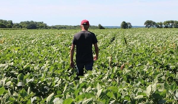 Nông dân tiếp xúc với đất có khả năng nhiễm nấm
