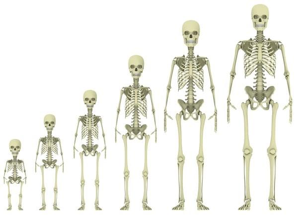 Thời điểm lớp sụn tăng trưởng chuyển hoàn toàn thành xương ở nữ sớm hơn nam