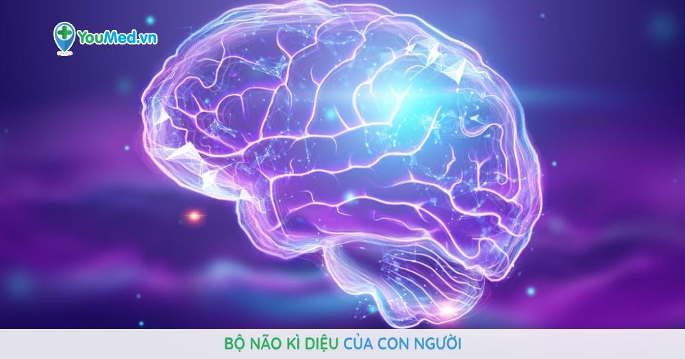 Bộ não kì diệu của con người