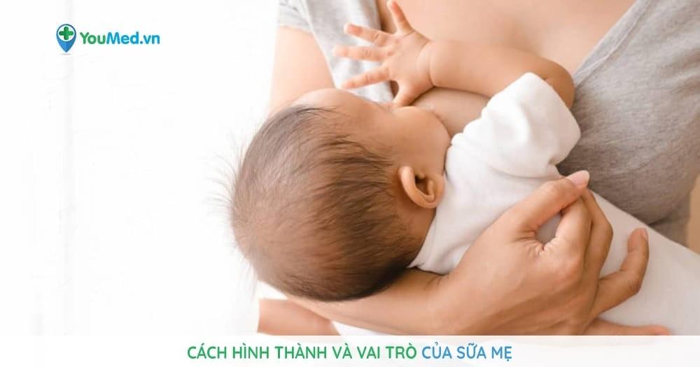 Cách hình thành và vai trò của sữa mẹ
