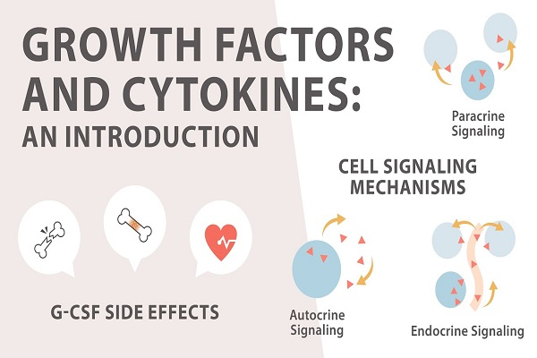 Hormon Cytokin