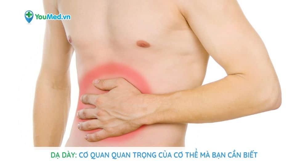 Dạ dày: Cơ quan quan trọng của cơ thể mà bạn cần biết