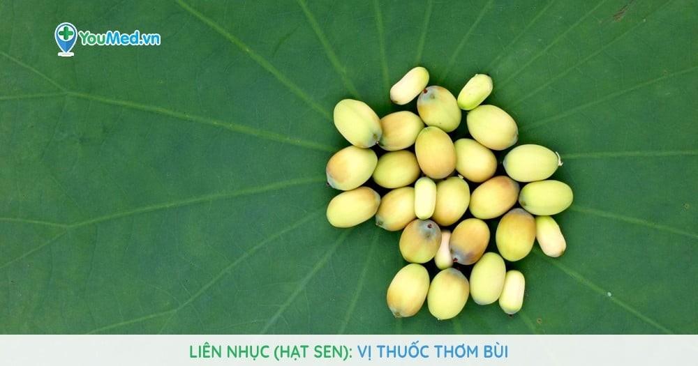 Liên nhục (hạt sen) - Vị thuốc thơm bùi