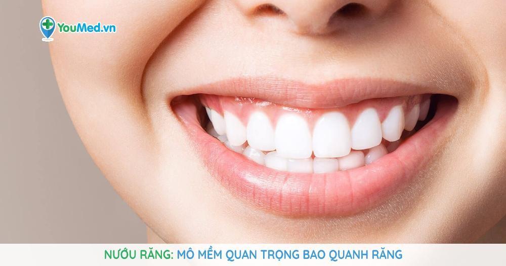 Nướu răng Mô mềm quan trọng bao quanh răng