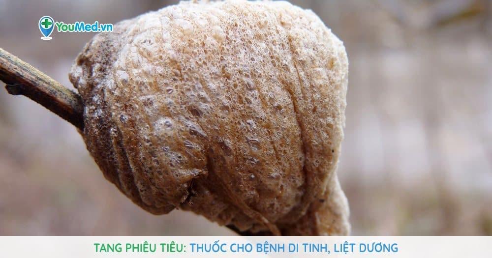 Tang phiêu tiêu: Thuốc cho bệnh di tinh, liệt dương
